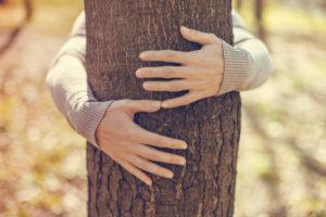 tree owner