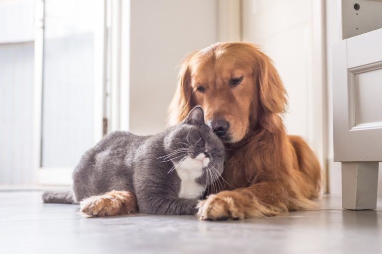 dog cuddling with a cat
